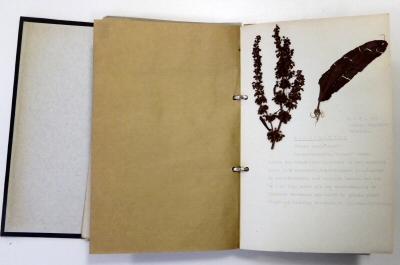 Plantenverzameling met inventarislijst 1968